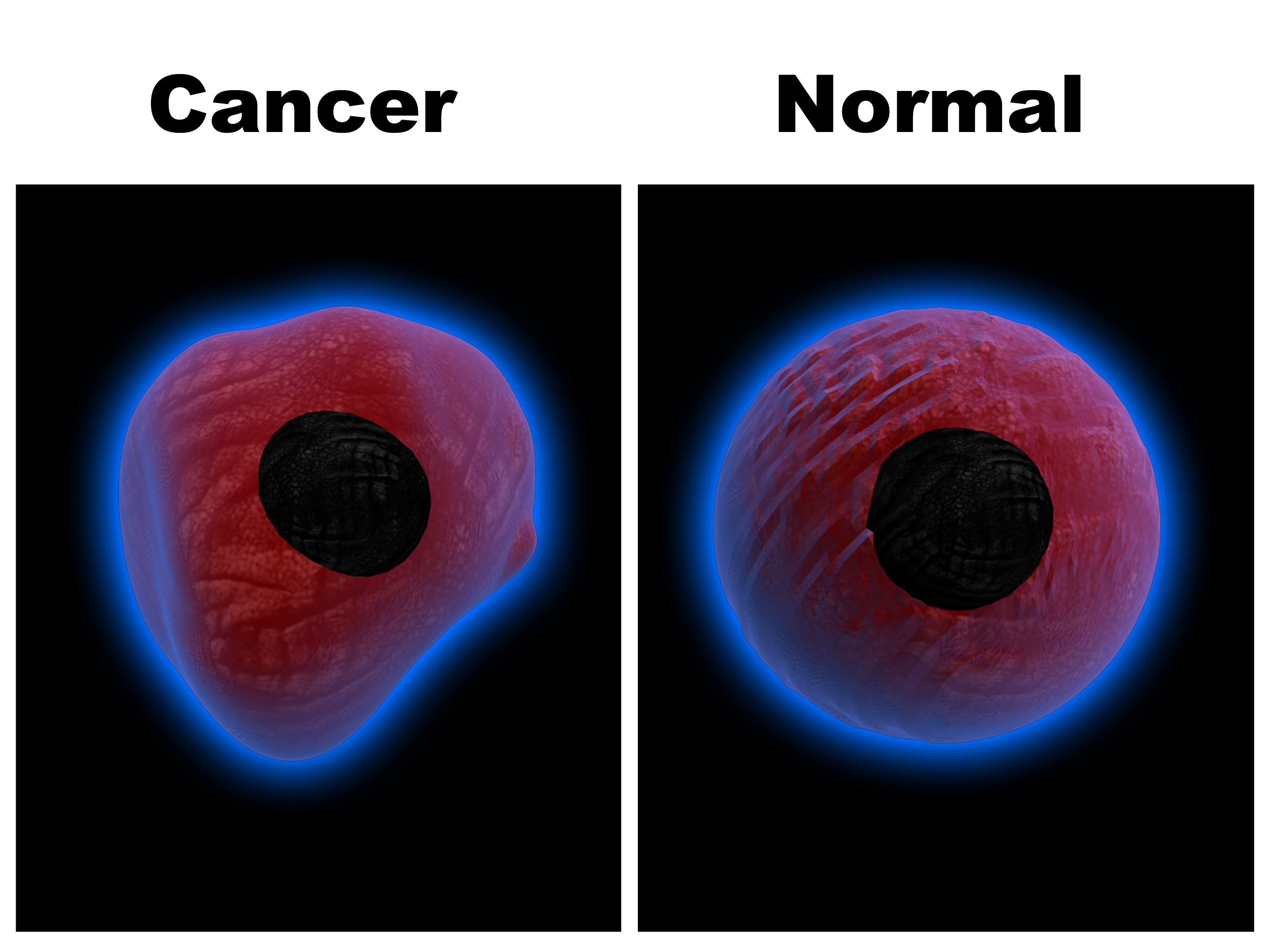 Cancer vs Normal Cell
